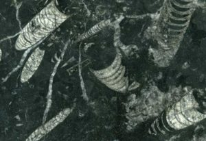 Nero Fossil granite tile